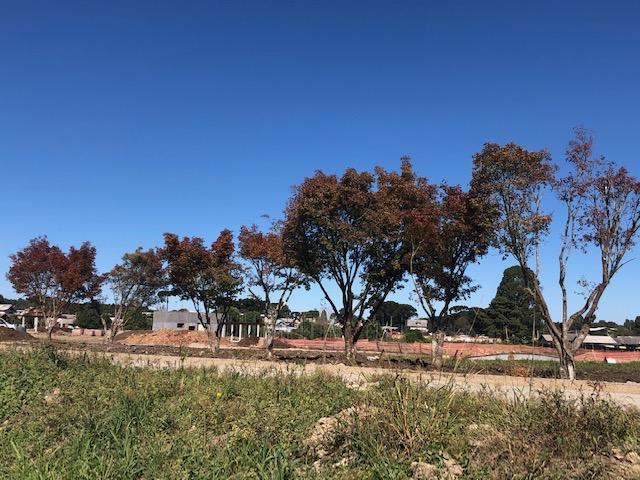 Prefeitura realiza plantio de 450 mudas de árvores nativas